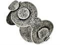 Chisel Stainless Steel Antiqued Circles 7in Bracelet